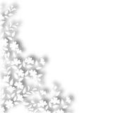 White plant border Stock Image