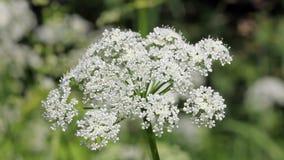 White plant stock footage