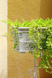 White planter filled with fresh green plants Stock Images