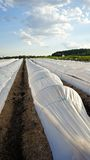 White plastic row covers in field Royalty Free Stock Image