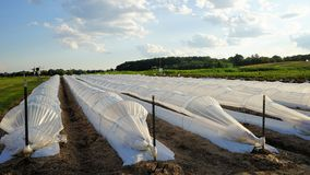 White plastic row covers in field royalty free stock photos
