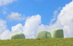 The white plastic wrapped round hay bales (silage) with clear bl Stock Images