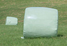 The white plastic wrapped round hay bales (silage) on the green Royalty Free Stock Photo