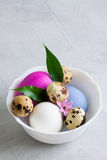 White plate with colourful easter eggs on grey concrete Stock Photos