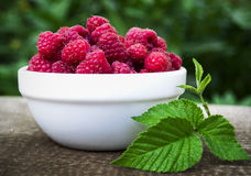 White plate full of fresh berries ripe raspberry is on the table Royalty Free Stock Photography