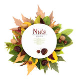 White plate with leaves and nuts Stock Image
