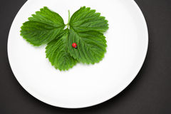 Plate with leaves and toy ladybird Stock Photography