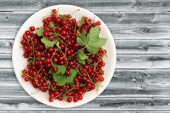 White plate of red currant on a gray wooden background. Top view with copy space. Fresh berries and leaves. Organic dietary food. White plate of red currant on Royalty Free Stock Images