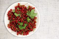White plate of red currant on a ivory canvas background. Top view with copy space. Fresh berries and leaves. Organic dietary food. White plate of red currant on Stock Images