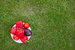 White plate with red peppers on a green grass Stock Images