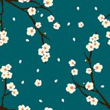 White Plum Blossom Flower on Indigo Blue Background. Vector Illustration.  vector illustration