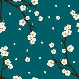 White Plum Blossom Flower on Indigo Blue Background. Vector Illustration.  Royalty Free Stock Photo