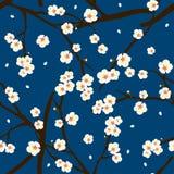 White Plum Blossom Flower on Indigo Blue Background. Vector Illustration Stock Image