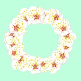White Plum Blossom Flower Wreath isolated on Green Mint Background. Vector Illustration.  stock illustration