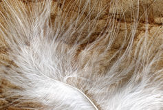 White plume closeup Stock Photos