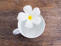 White plumeria flower and empty cup of coffee Stock Photo