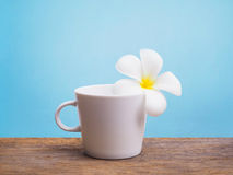 White plumeria flower and empty cup of coffee Royalty Free Stock Photos