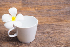 White plumeria flower and empty cup of coffee Royalty Free Stock Photo