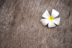 White  plumeria flower  on grunge wood Stock Photography