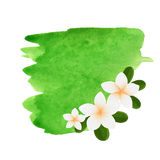 White plumeria flower logotype. Vector illustration of white Two Frangipani flowers with green leaves. Spa or beauty center logo Stock Photography
