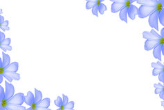 White Plumeria flowers background at corner Royalty Free Stock Photos