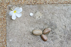 White Plumeria flowers on black stones Stock Photo