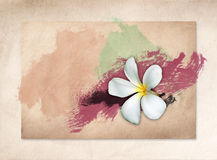 White Plumeria flowers on old paper Royalty Free Stock Photography