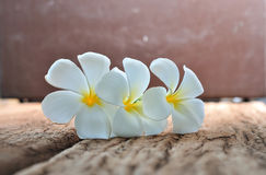 White plumeria flowers on rustic wood Stock Photo
