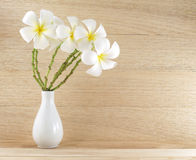 Bouquet pure white plumeria or frangipani in simple white pottery vase on wooden table floor and plank wall background. Tropical flowers arrangement that bloom royalty free stock image