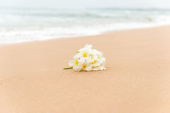 White Plumeria (frangipani) flower on sunny beach sand. Tropical relaxing vacation and spa background. Soft focus Royalty Free Stock Photos