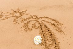 PreviewWhite Plumeria frangipani flower on sunny beach sand. White Plumeria frangipani flower on sunny beach sand. Tropical relaxing vacation and spa background Stock Photography