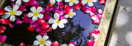 White Plumeria and roses floating on water Royalty Free Stock Image