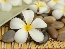 White plumeria and stones
