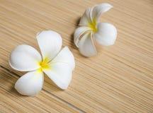 White plumeria on tiles floor Royalty Free Stock Images