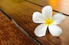 A white plumeria on wood floor Stock Photo