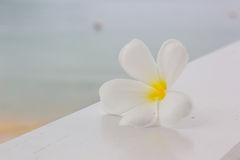 White plumeria on wooden table and beach background Royalty Free Stock Images