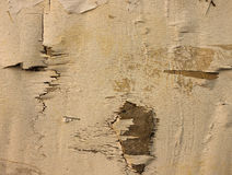 White ply wood for background Stock Images