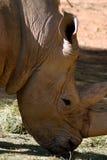 white południowej afryce nosorożca Fotografia Stock