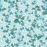 White poinsettia.Christmas seamless pattern, Royalty Free Stock Image