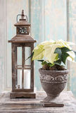 White poinsettia flower (Euphorbia pulcherrima) and rustic woode Stock Images