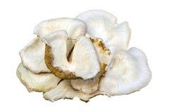 White poison mushtroom isolated Royalty Free Stock Photography
