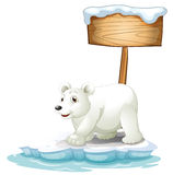 A white polar bear below the wooden signboard Stock Photos