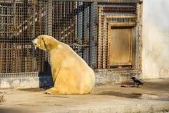 White polar bear in zoo Stock Photo