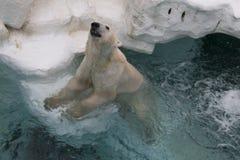 White Polar Bear. White Polar Bear in the zoo. Show time in the zoo, Japan Stock Photography