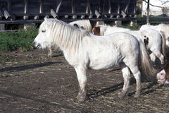 White pony Stock Images