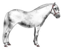 White pony. Illustration of a white pony - Realistic style Royalty Free Stock Images