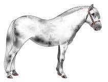 White pony. Illustration of a white pony - Realistic style vector illustration