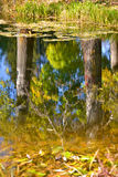 White poplar trunk reflection in the water Stock Photography
