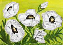 White poppies, oil painting Royalty Free Stock Image
