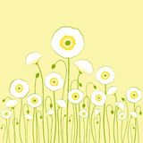 White poppy on yellow background Royalty Free Stock Photography